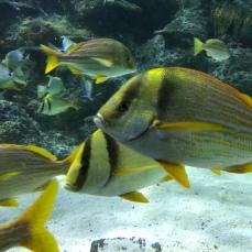 Skegness Aquarium